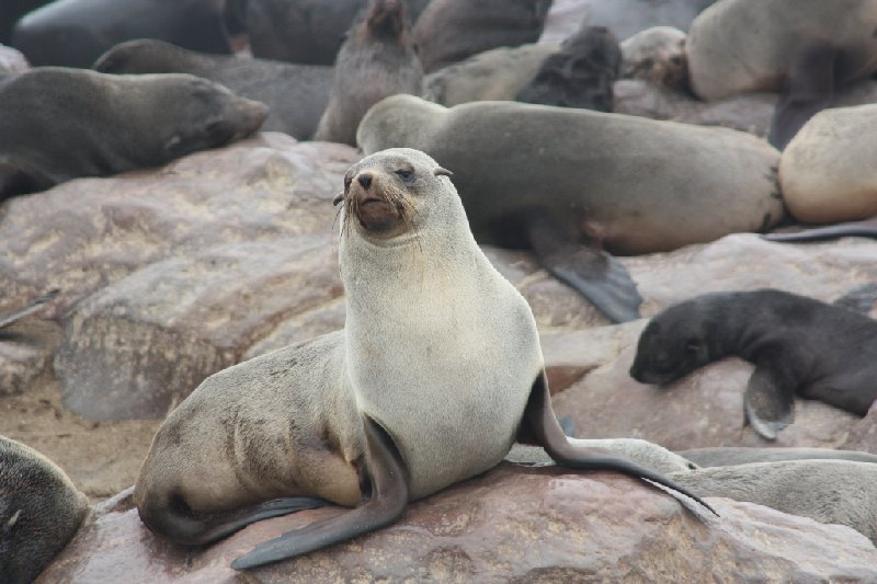 Cape Cross seal reserve Namibia Vacation Experience