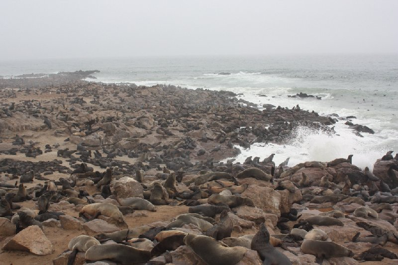 Cape Cross seal reserve Namibia Travel Gallery