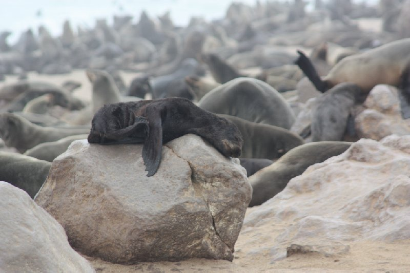 Cape Cross seal reserve Namibia Review Photo