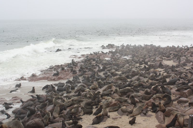 Cape Cross seal reserve Namibia Information