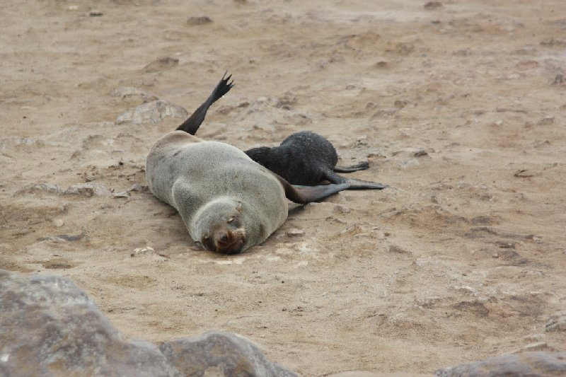 Cape Cross seal reserve Namibia Travel Experience
