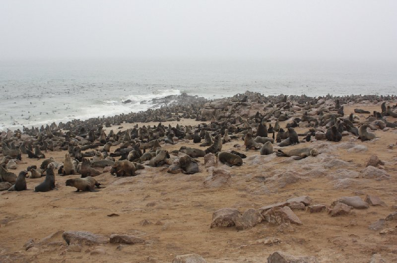 Cape Cross seal reserve Namibia Picture Sharing