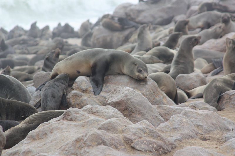 Cape Cross seal reserve Namibia Trip Sharing
