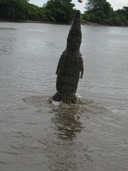 Photo Jumping crocodiles in Darwin capital
