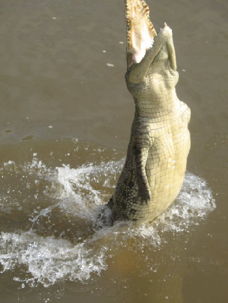 Photo Jumping crocodiles in Darwin happen
