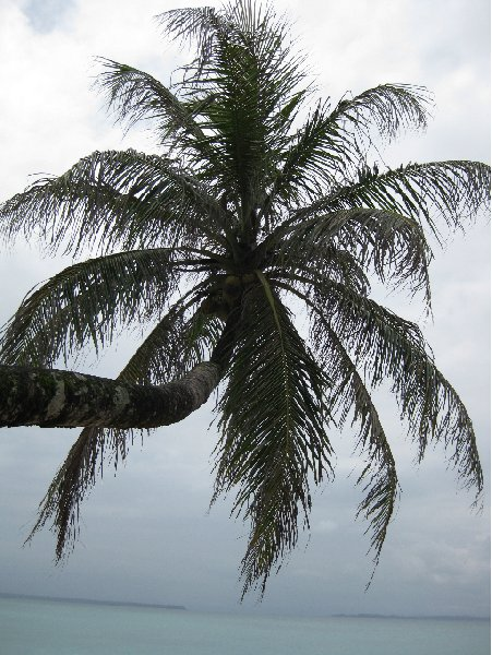 Bocas del Toro on Isla Colon Panama Diary Picture