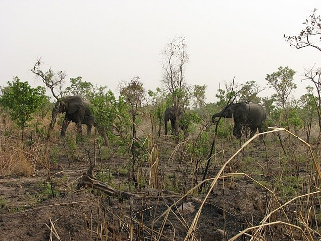 Benin Wildlife Safari Tour Tanguieta Holiday Pictures