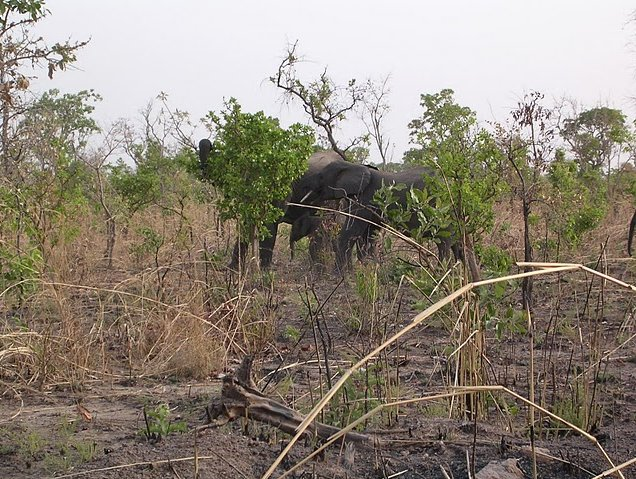 Benin Wildlife Safari Tour Tanguieta Photographs