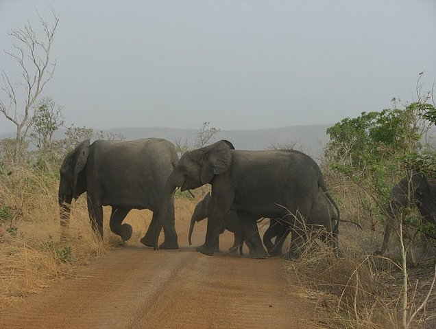 Benin Wildlife Safari Tour Tanguieta Album Photographs