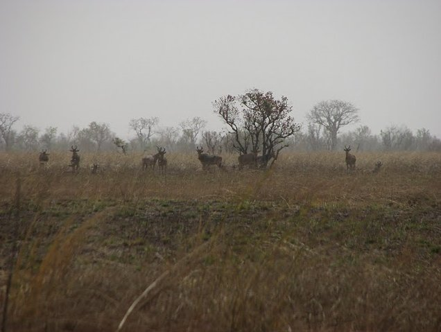 Benin Wildlife Safari Tour Tanguieta Vacation Photo