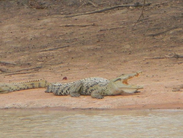 Benin Wildlife Safari Tour Tanguieta Holiday Photos