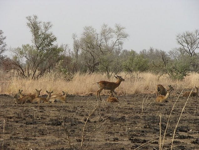 Benin Wildlife Safari Tour Tanguieta Diary Information