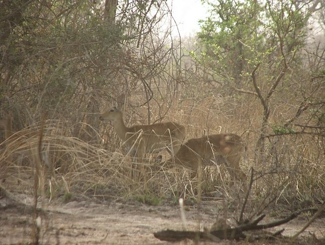 Benin Wildlife Safari Tour Tanguieta Vacation Picture