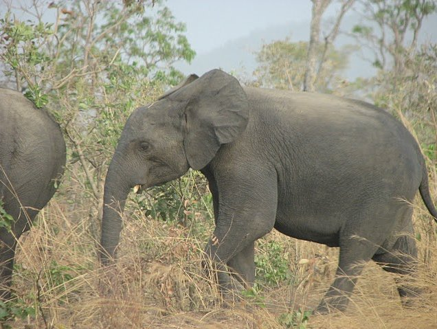 Benin Wildlife Safari Tour Tanguieta Travel Photos