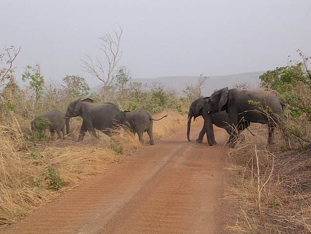 Benin Wildlife Safari Tour Tanguieta Vacation Guide