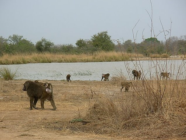 Benin Wildlife Safari Tour Tanguieta Holiday Adventure