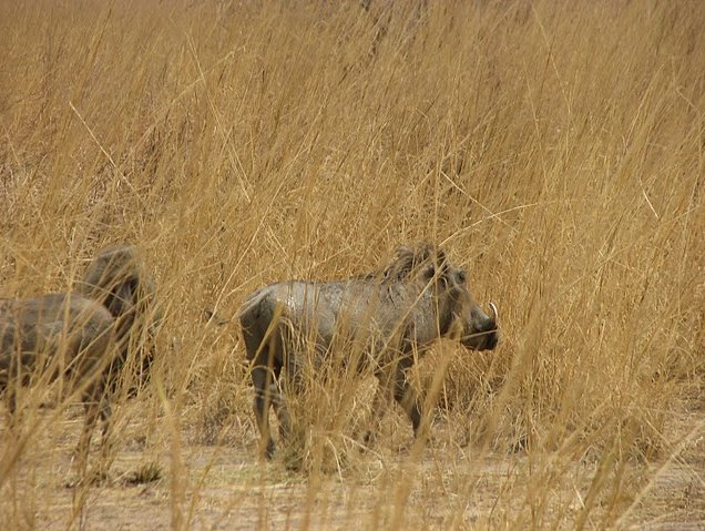 Benin Wildlife Safari Tour Tanguieta Diary Pictures