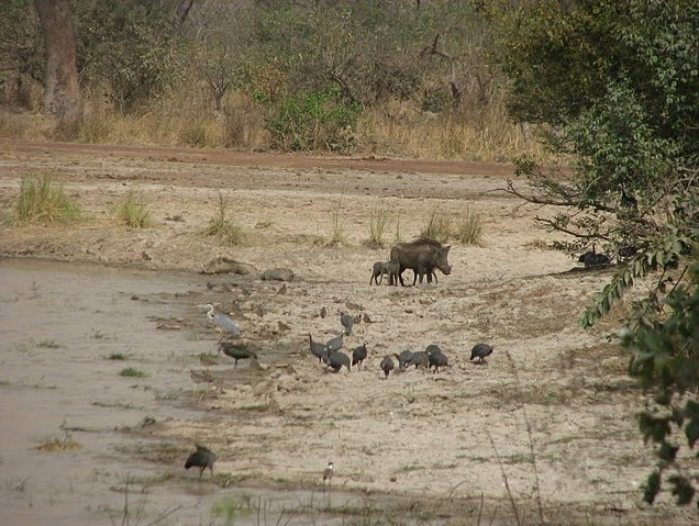 Benin Wildlife Safari Tour Tanguieta Trip Guide