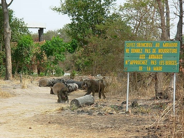 Benin Wildlife Safari Tour Tanguieta Travel Guide