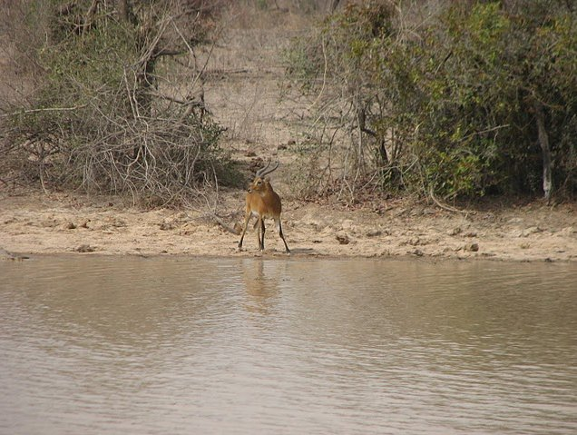 Benin Wildlife Safari Tour Tanguieta Holiday Tips