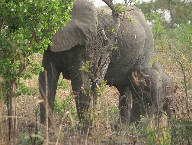 Benin Wildlife Safari Tour Tanguieta Trip Photographs