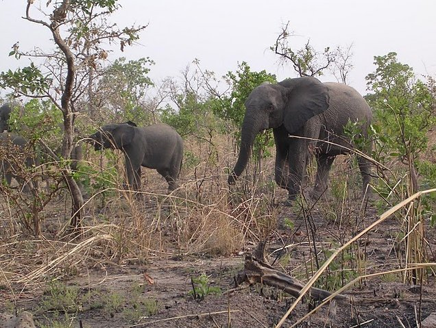 Benin Wildlife Safari Tour Tanguieta Holiday Experience