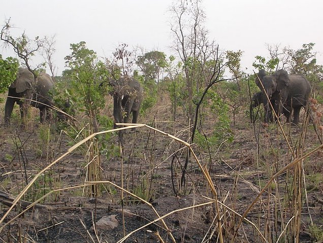 Benin Wildlife Safari Tour Tanguieta Diary Picture