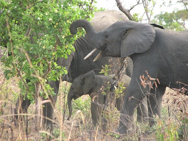 Benin Wildlife Safari Tour Tanguieta Diary Photography
