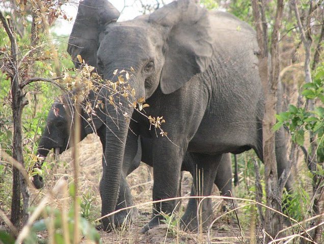Benin Wildlife Safari Tour Tanguieta Photos