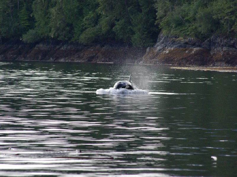 Vancouver Island orca watching Canada Trip Pictures