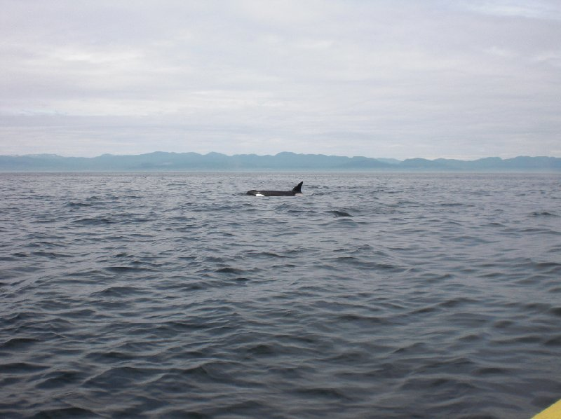 Vancouver Island orca watching Canada Travel Tips