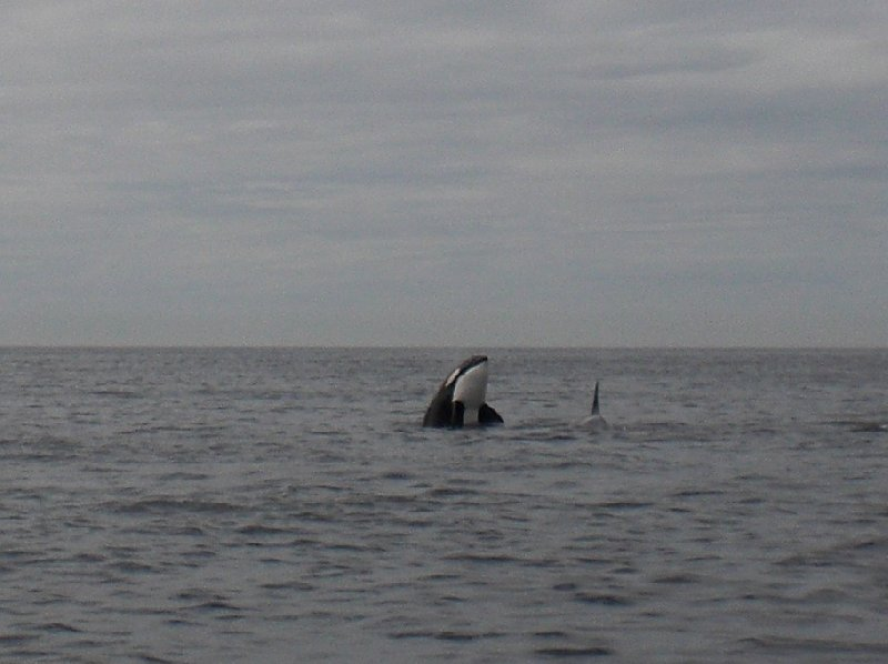 Vancouver Island orca watching Canada Holiday Review