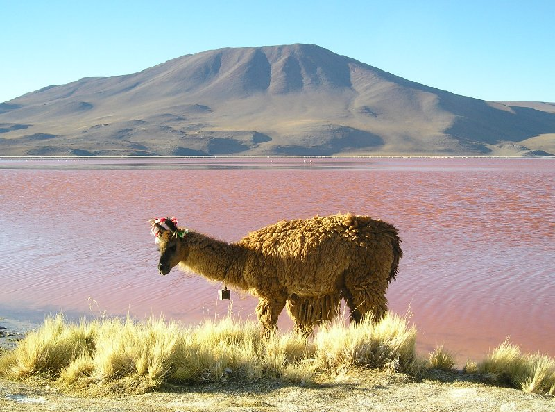 Photo Uyuni salt flats tour definitely