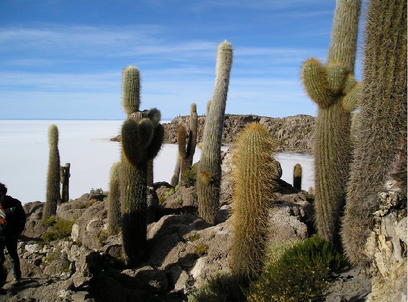 Photo Uyuni salt flats tour something