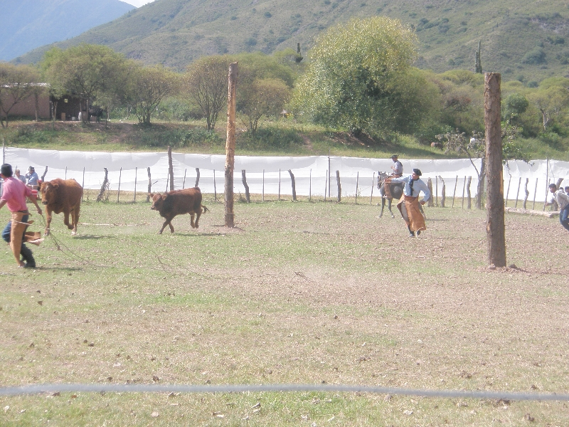 Horse Riding with Argentinian Gauchos in Salta Argentina Review