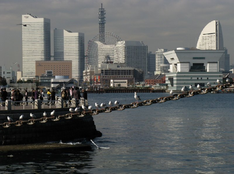 Photo Yokohama City Guide arranged