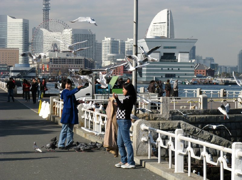 Yokohama City Japan Travel Sharing