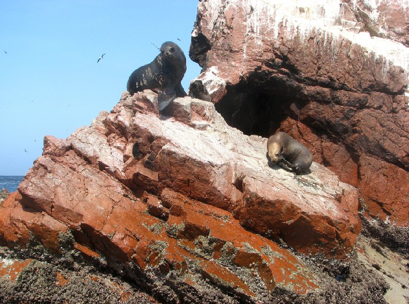 Reserva Nacional de Paracas near Pisco Peru Diary Pictures