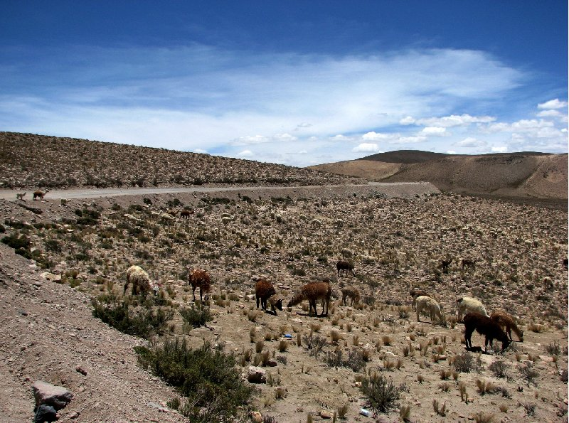 From Arequipe to Chivay and Colca Canyon Peru Diary Photo