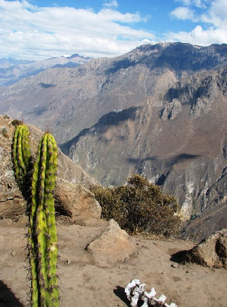 Colca Canyon Peru Album Photos