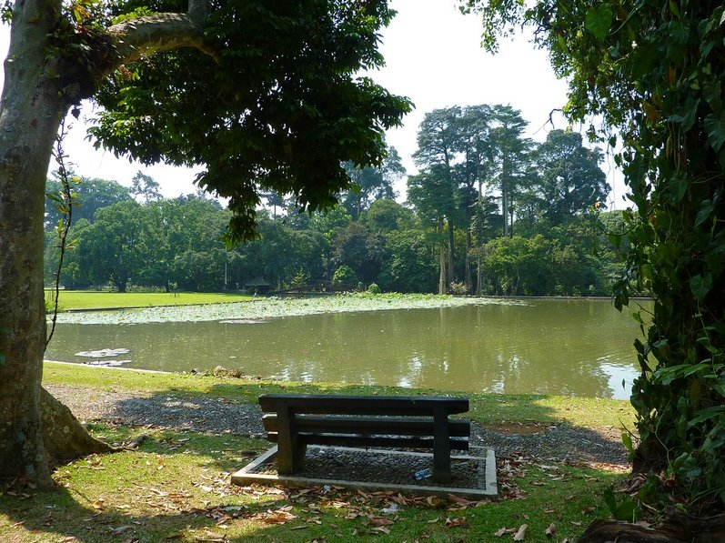 Photo Bogor Botanical Garden straight