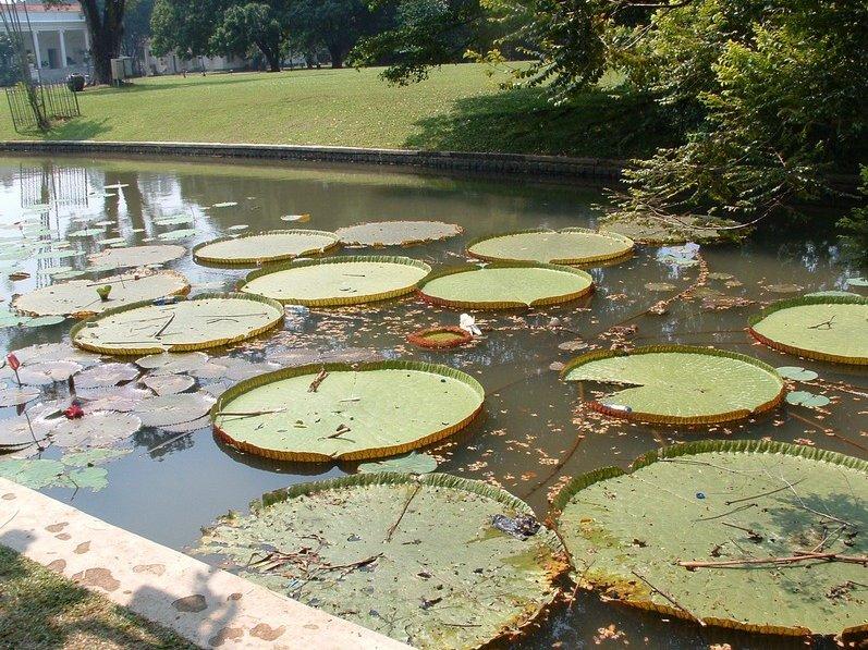 Bogor Botanical Garden Indonesia Blog Picture