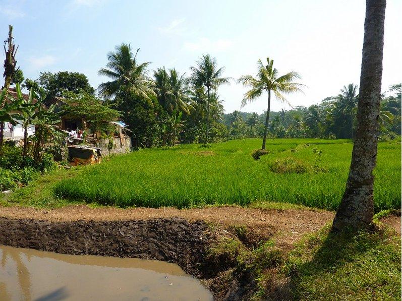 Bogor Indonesia Blog Adventure