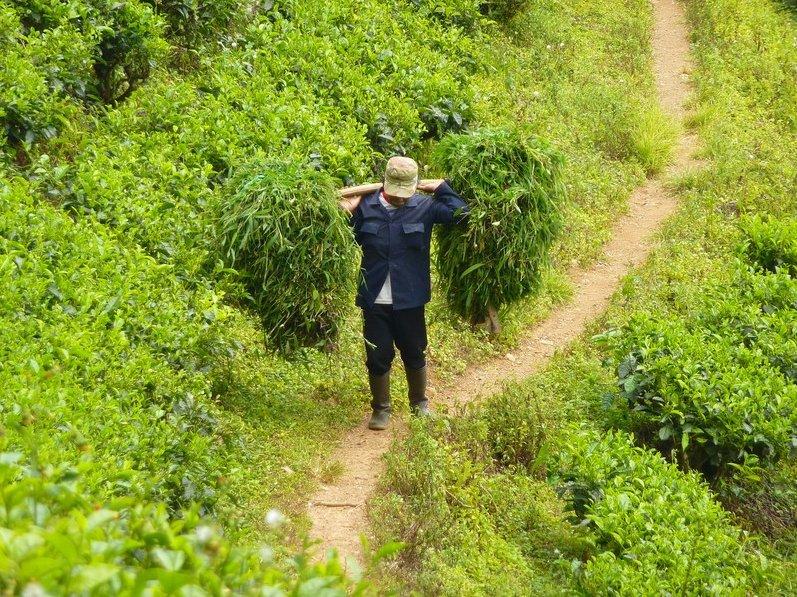 Bogor Botanical Garden Indonesia Adventure