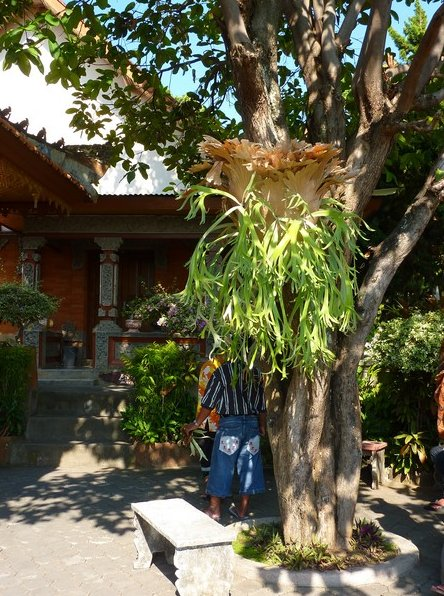 Banjar Buddhist monastery Dencarik Indonesia Travel Adventure