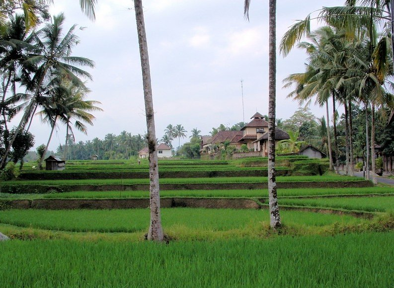 Ubud Indonesia Diary Photography