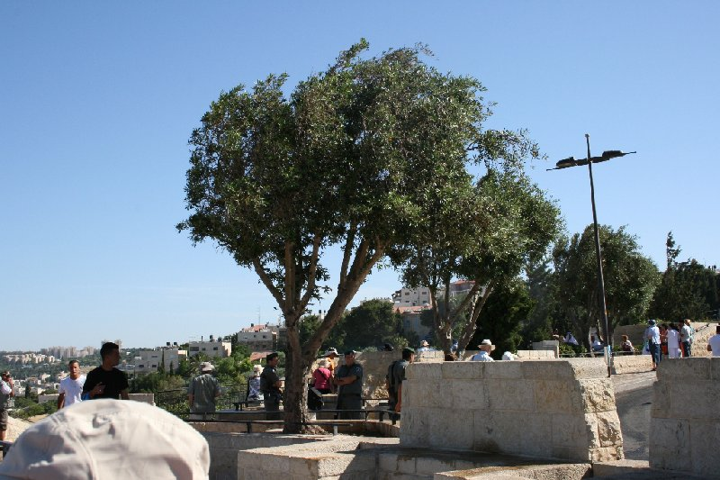Walking tours in Jerusalem Israel Travel Album