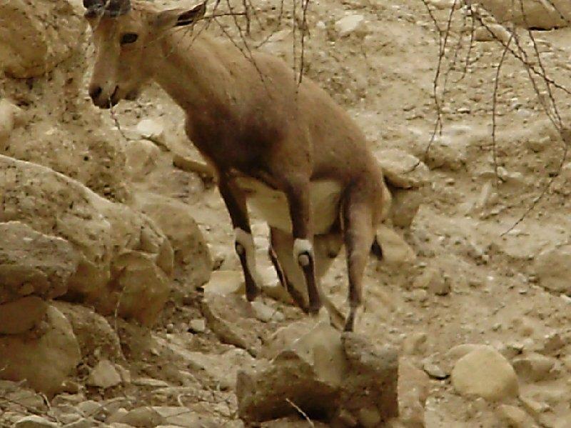 Ein Gedi Nature Reserve Israel Vacation Information