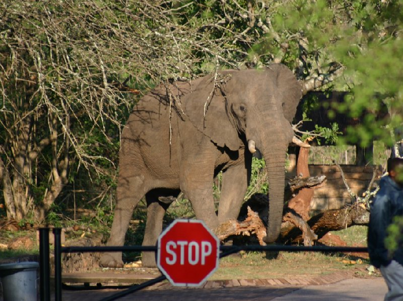 Kruger National Park Nelspruit South Africa Diary Tips