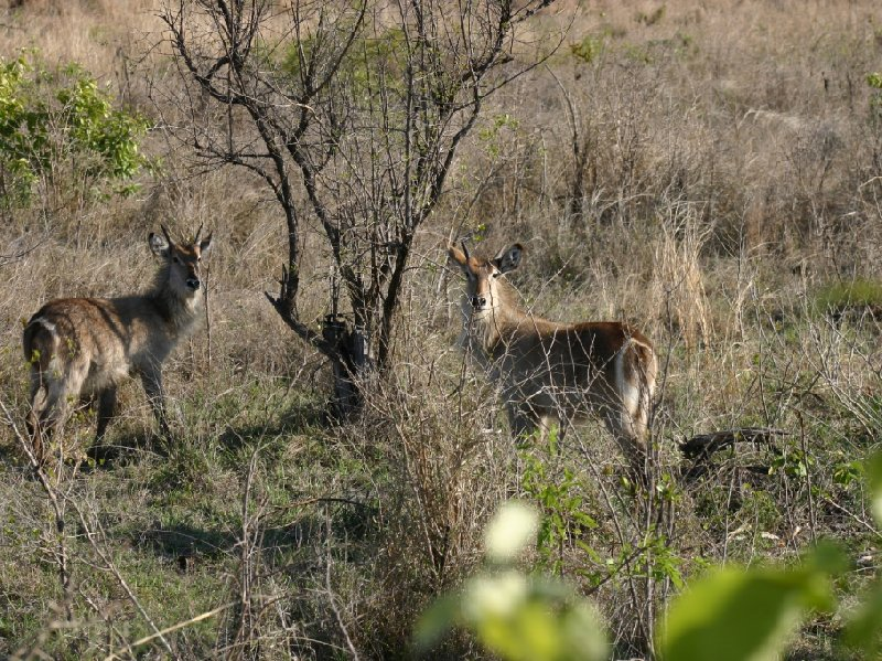 Photo Kruger National Park visitors